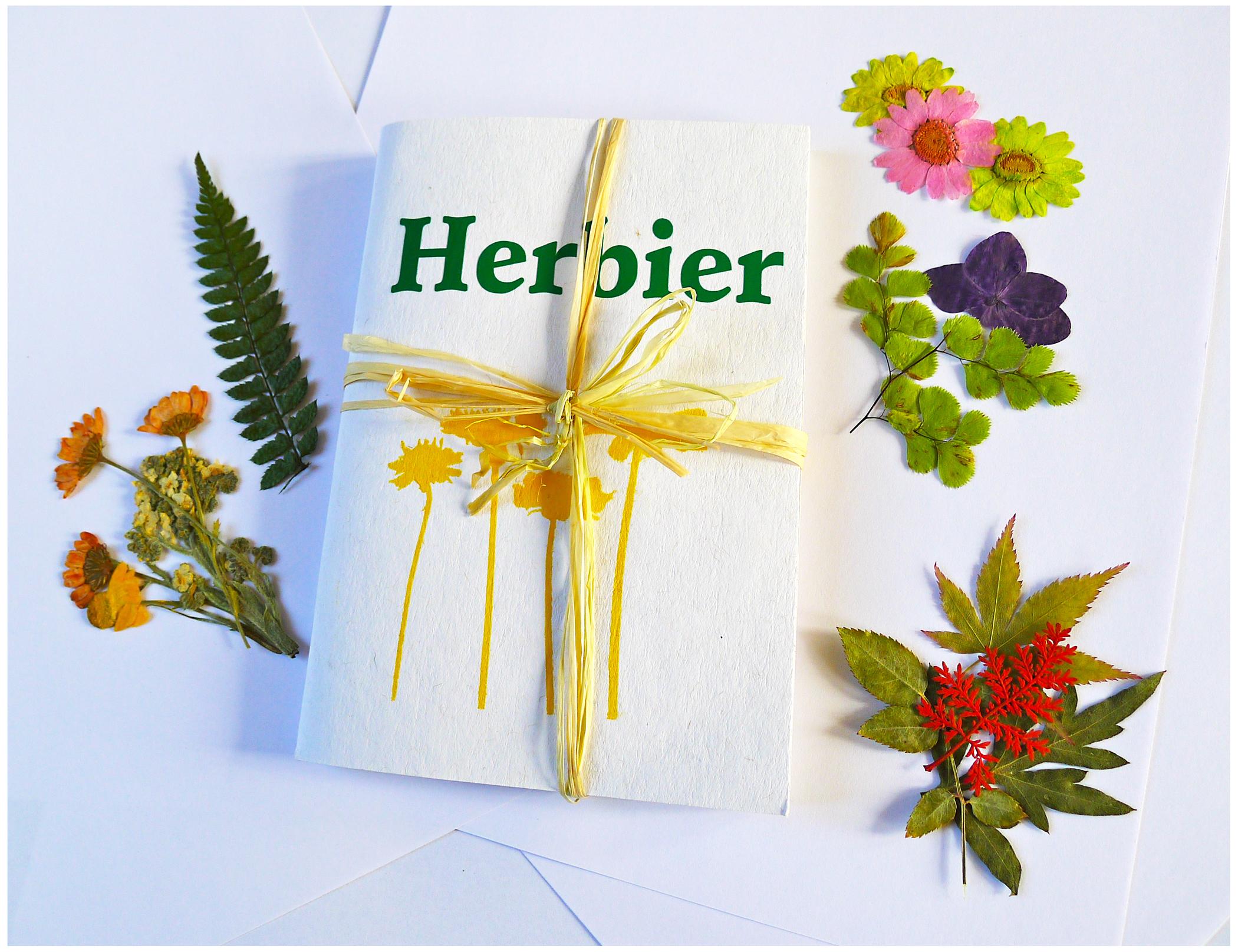 La chasse aux tr sors botaniques mon premier herbier le jardin des enfants - Faire un herbier ...