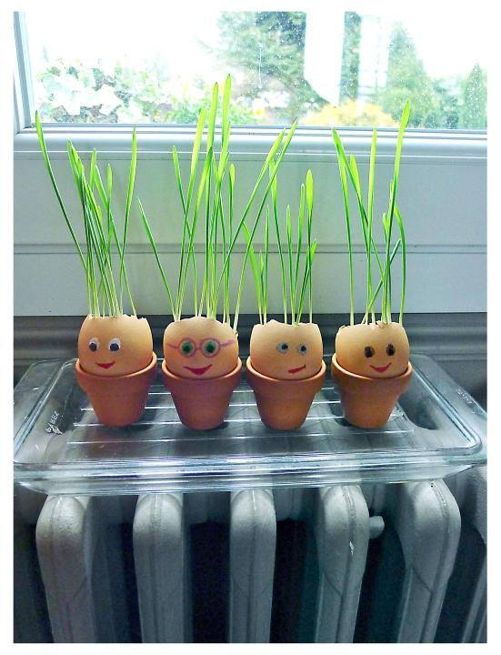Une famille en coquilles le jardin des enfants - Coquille d oeuf dans le jardin ...